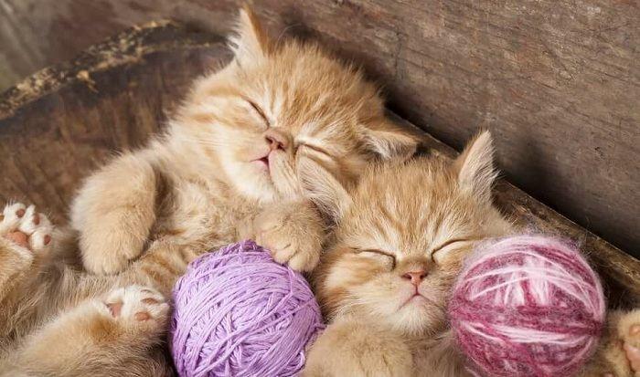 сон про котят