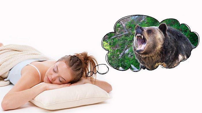 видеть медведя во сне