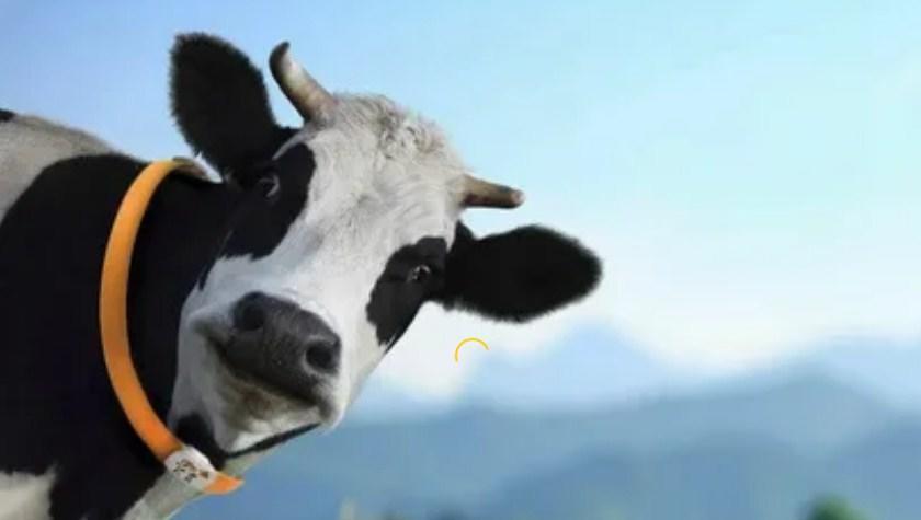 увидеть во сне корову