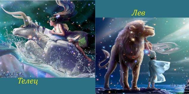 Лев и Телец: совместимость знаков зодиака в процентах