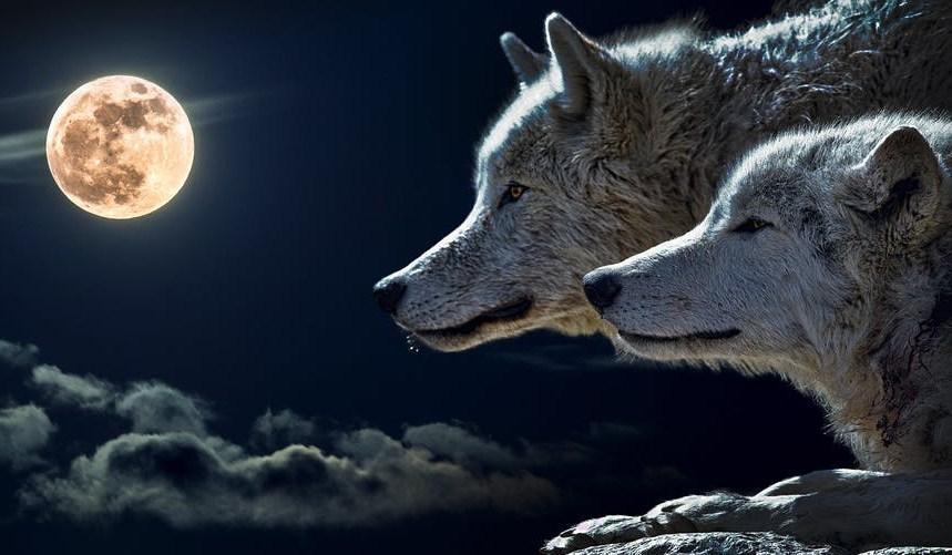 видеть волка во сне