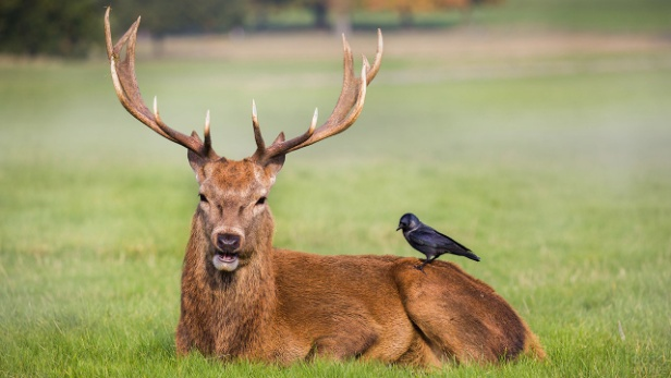 Кто является вашим духовным животным согласно знаку зодиака